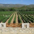 Chios vineyards Kefalas