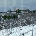 Gaia vineyards snow