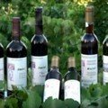 kasteli wines
